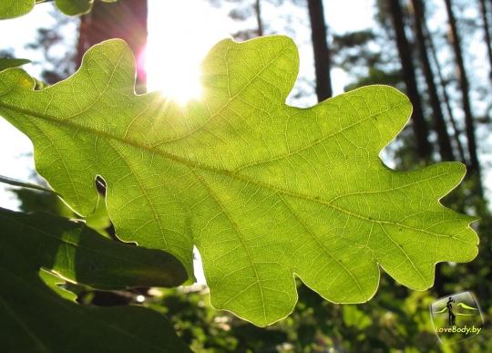 Фотогалерея: альбом «Фото: Цветы и растения»: http://www.lovebody.ru/cp19/ga11/gi98/anAPhoto/LoveBody.html
